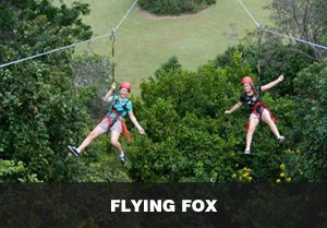 flying_fox